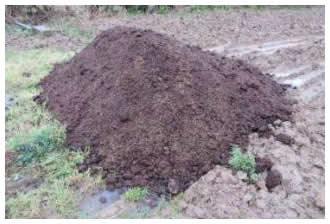 畑の牛堆肥01